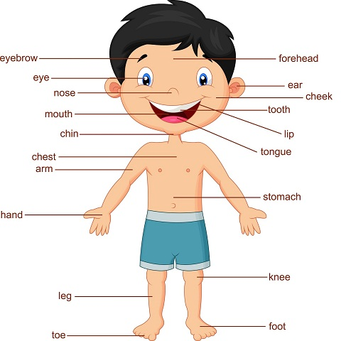 PARTS OF THE BODY AND DESCRIBING PEOPLE