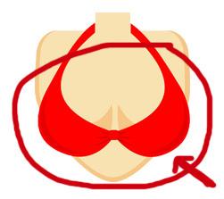 Từ vựng breast